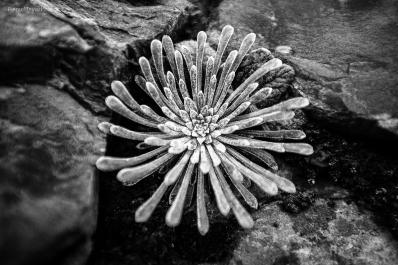 L'étoile des roches